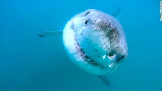 Great white shark lair found in Pacific Ocean