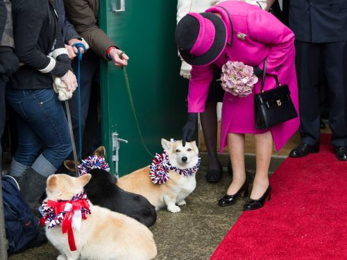 24 adorable photos of Queen Elizabeth with her royal corgis that will melt your heart
