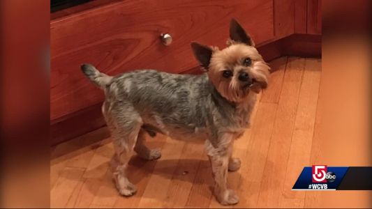 Woman loses pet Yorkie to Coyote attack