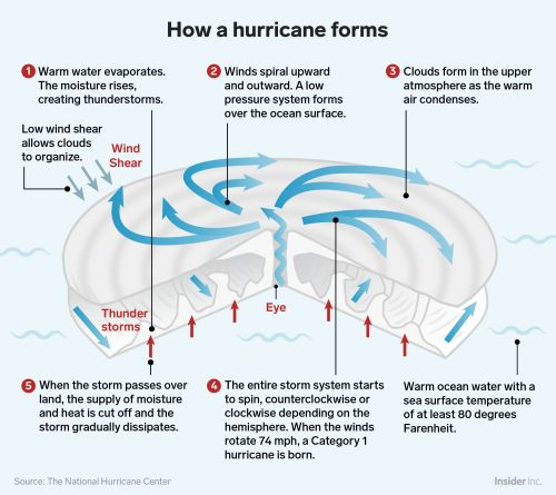 How hurricanes like Florence form