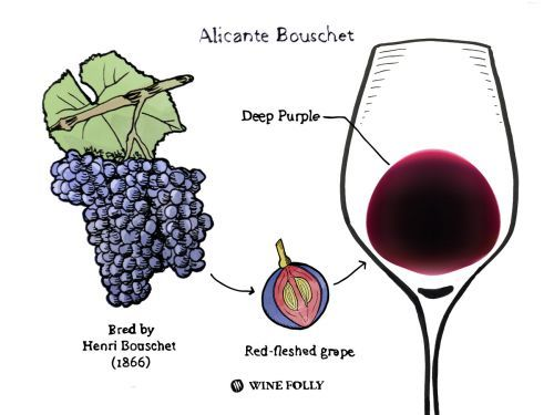 Lovers of Big Reds Look To Alicante Bouschet