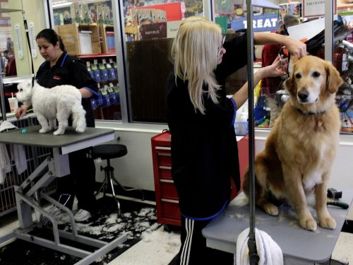 As debate rages on over whether pet grooming is essential service, Petco furloughs many employees but refuses to close grooming centers