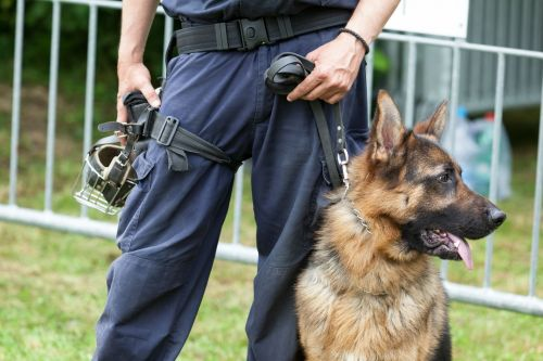 Video shows dogs being trained for active shooter threats in schools