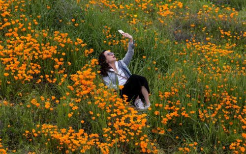 Rare California super bloom made 'unbearable' by selfie-takers