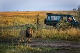 Global luxury safari tourism market is seeing a steady increase