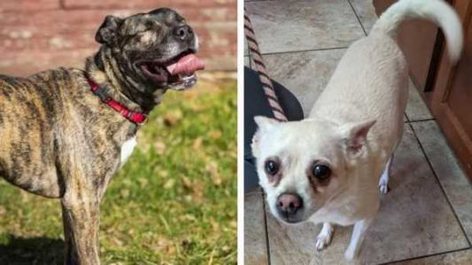 Cincinnati animal shelter gets 'hammered' with stay dogs, needs adopters and fosters