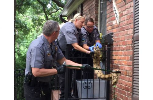 Ball python discovered on mailbox at Overland Park home