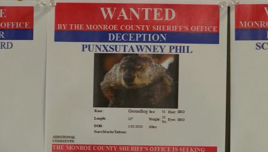 WANTED: Sheriff's office accuses Punxsutawney Phil of deception, as Pennsylvania's winter weather lingers into spring