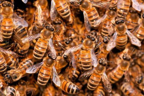 Man dies after being swarmed by bees
