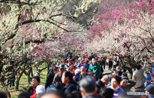 Festival featured with plum blossom kicks off in Nanjing