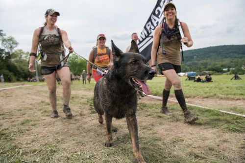 Canine Spartan Race presented by Nulo