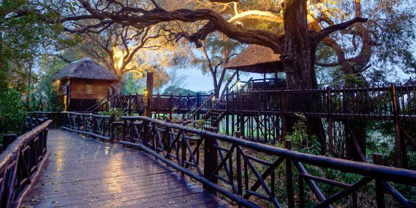 One of the World's Best Safaris Lies Outside Johannesburg. Here's How to Visit