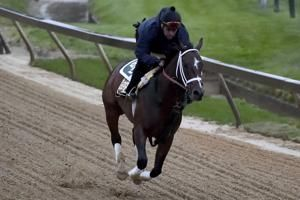 Lukas-trained long shot Market King cleared for Preakness