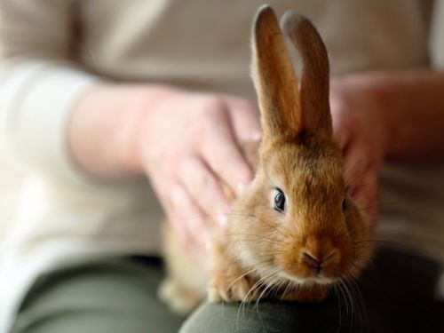 16 things you need to know before adopting a rabbit