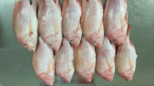 Why Restaurant Demand For Smaller Fish Fillets Is Bad News For Oceans