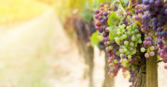 These Are the 7 Most Popular Organic Wines in America