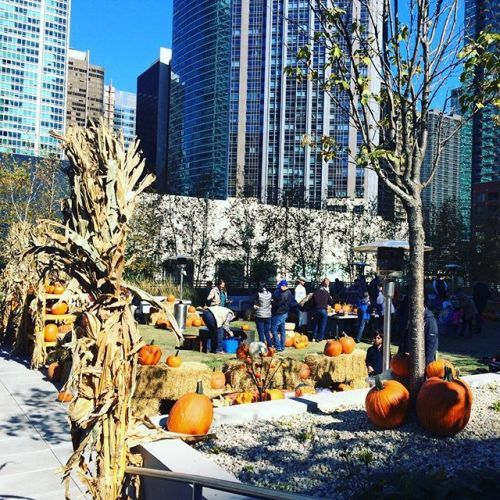 Chicagoland Fall Fun with the Family