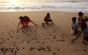 Odisha to promote turtle tourism in the coming months