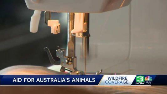 Sac businesses hold 'sewing party' to help animals affected by Australian wildfires