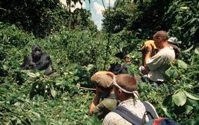 The Virunga national park of Democratic Republic of Congo remains closed to the visitors