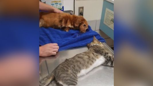 Authorities: 11-year-old boy suspected in injection deaths of 3 pets ​