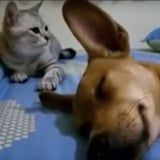 I Feel This Cat's Reaction to a Dog Farting in Its Sleep on a Deep, Personal Level