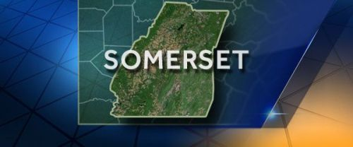 Cow stolen, butchered on side of road in Somerset