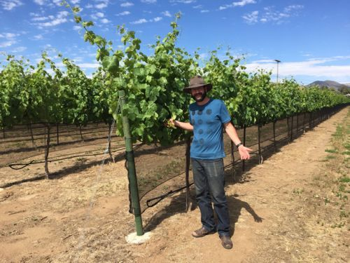 Slow Wine Guide to the Wines of California: prizes to be announced next week