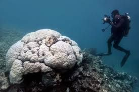 Rapid change in climate likely to 'destroy reef tourism' in Australia