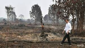 Tourists cancel Indonesia trips as forest fires continue to rage