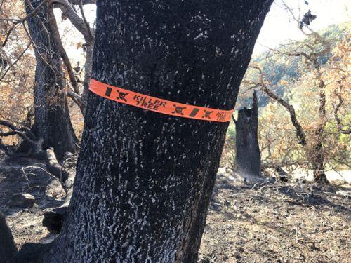Killer trees and a long road to recovery in California wine country