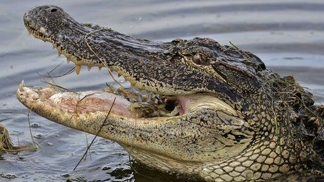 Alligator kills South Carolina woman, drags her body into lagoon