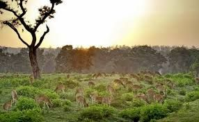 Now Tourism Department is set to provide basic amenities at Bandipur