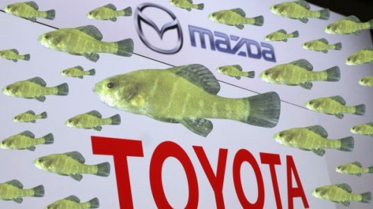 Lawsuit Claims $1.6-Billion Toyota-Mazda Factory Could Push Fish Species To Extinction