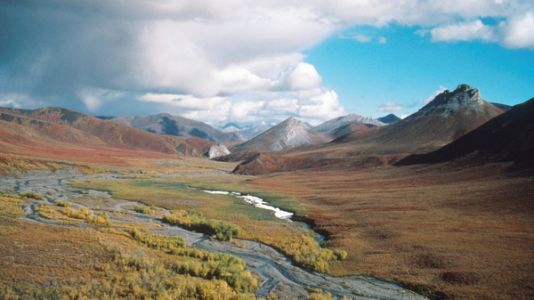 Senate May Approve Drilling In Alaskan Wilderness With Tax Bill