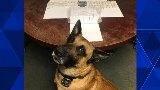K-9 finds nearly 3,200 bags of heroin during traffic stop