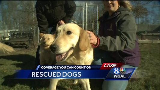 Dogs rescued from South Korean meat market now in Lancaster County