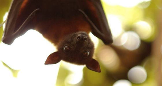 7 Places to Experience Bat Tourism