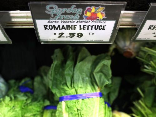 Throw Away All of Your Romaine Lettuce Right Now