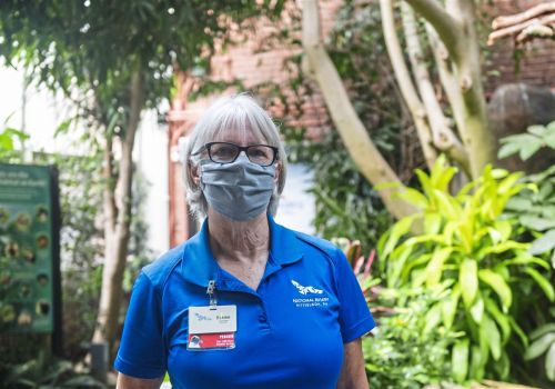 Bethel Park bird lover is volunteer of the year at National Aviary