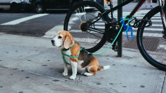 These Are Your Five Favorite Dog Leashes