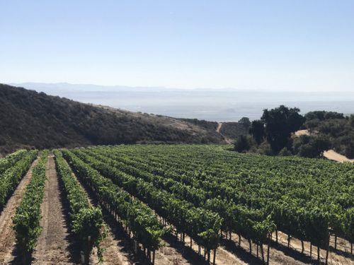Californians keep all the good wine for themselves! Wouldn't you? Slow Wine Guide 2020 dispatch