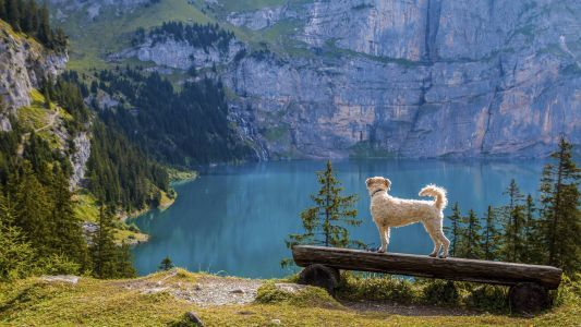 Discover These Dog-Friendly Travel Destinations Across America