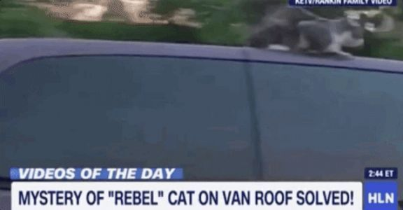 Cat That's Tougher Than You Survives 60 MPH Roof Ride
