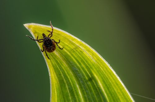 These six tick-borne diseases are spreading rapidly in the U.S