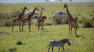 Kenya reduces entry fees of wildlife sanctuaries to revive tourism