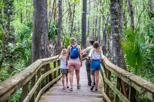 Guide to the Gorgeous Highlands Hammock State Park, Florida