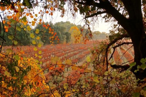 In Lodi autumn colors overflow like poetry