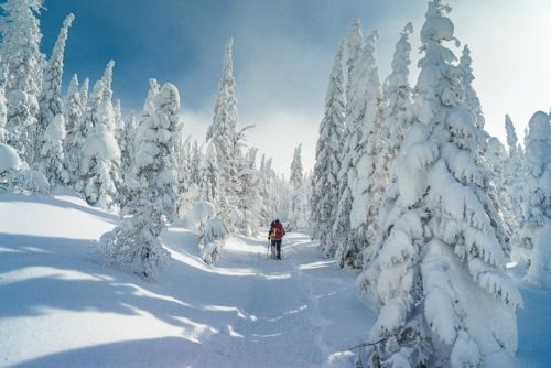 Snowshoeing 101: Why do it, What to Wear, Where to Go