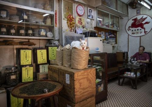 How to Explore Tea in Hong Kong